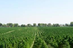 L7 Hemp - Agricultural Services - Custom Farm Services - 4