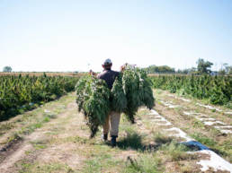 L7 Hemp - Crude Processing - Image